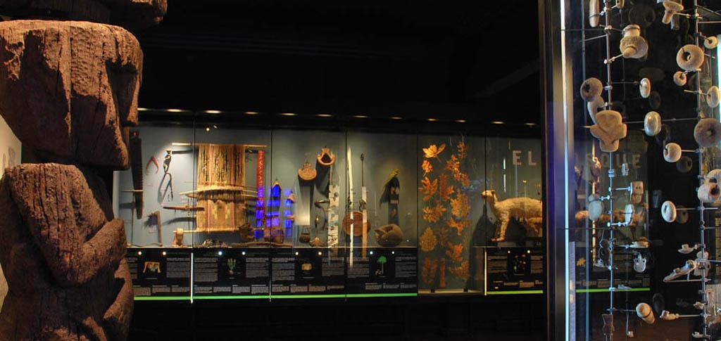 Museo de Historia Natural de Concepción celebra 118 años