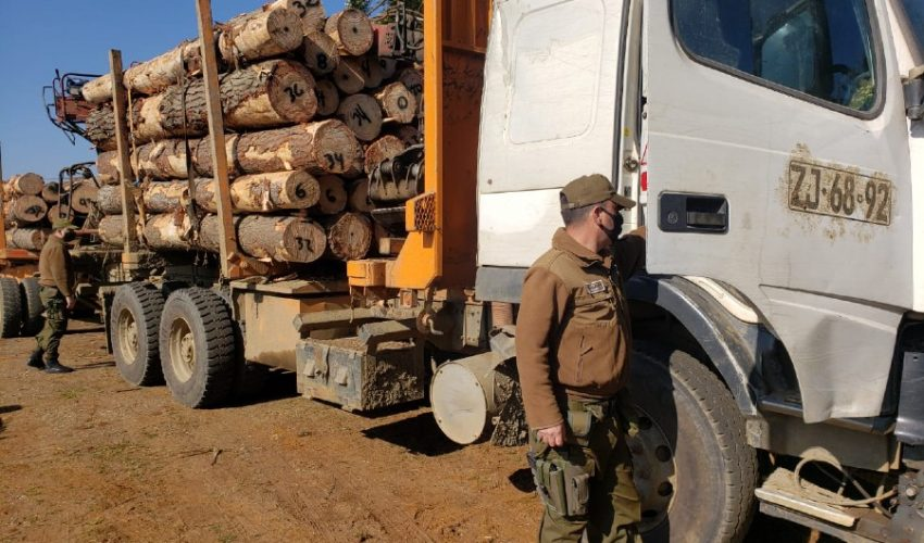 32m3 of Pine logs seized near Los Alamos